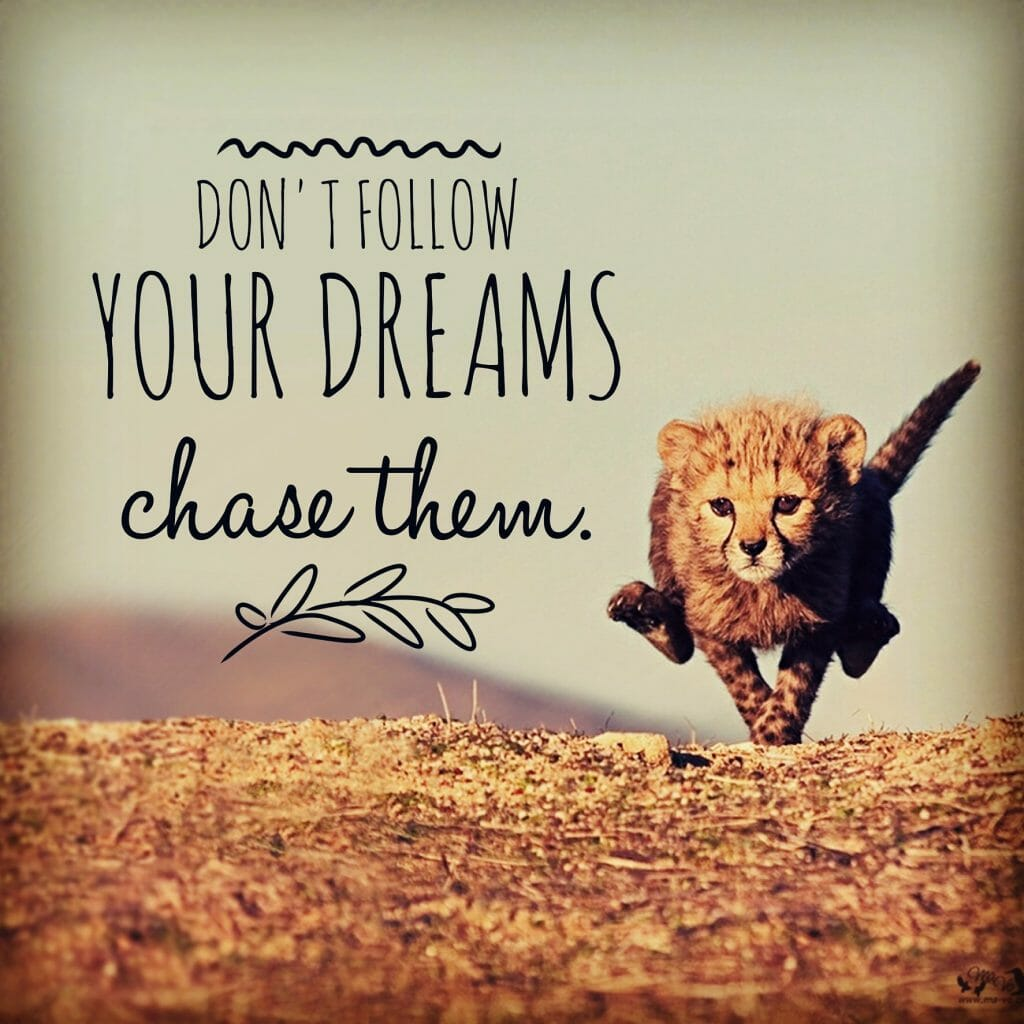 Don't follow your dreams chase them.