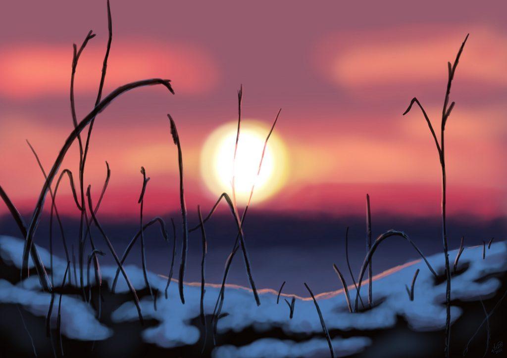 winter grassy sunset